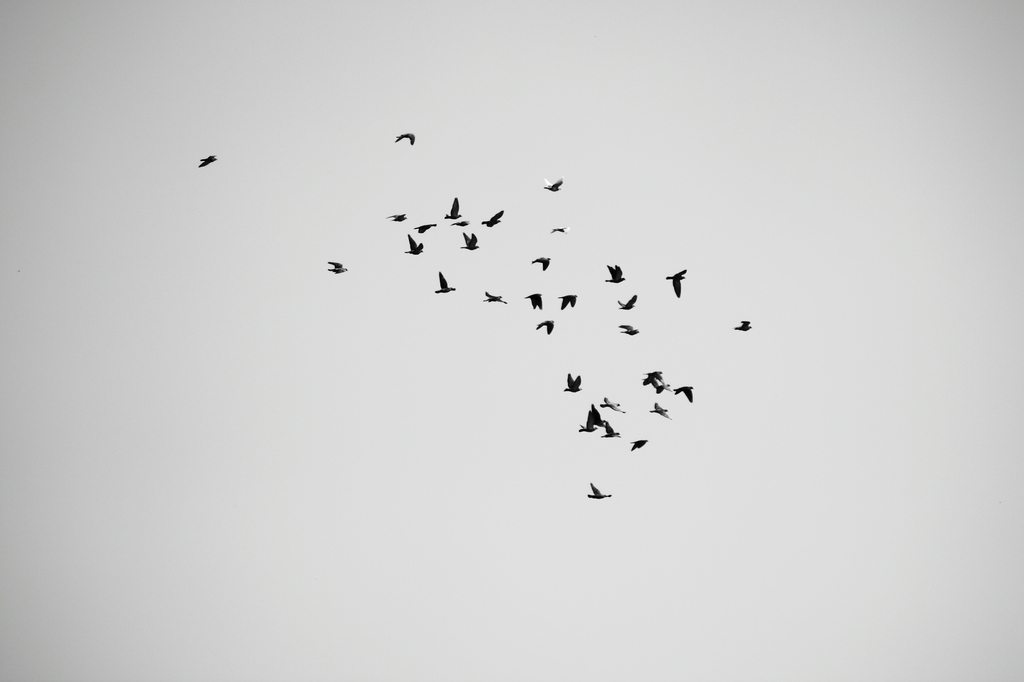 鳥 点_01