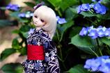 紫陽花と瑠月2014 side A