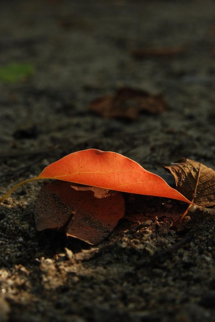 秋の葉一枚。