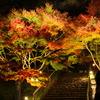 紅葉 虹の郷 ライトアップ