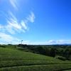 夏空と遠くまで広がる茶畑