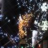 街路樹のイルミネーション☆SBS通り_静岡
