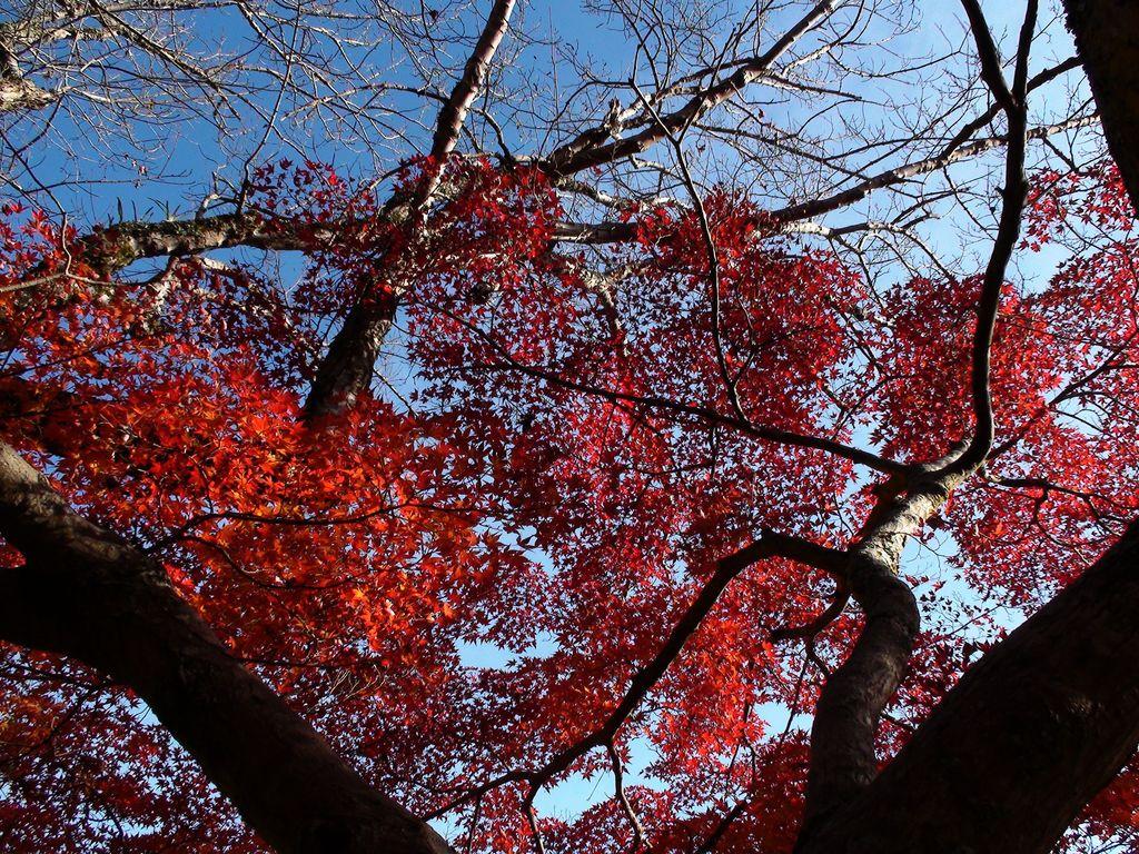 恵那峡の秋4