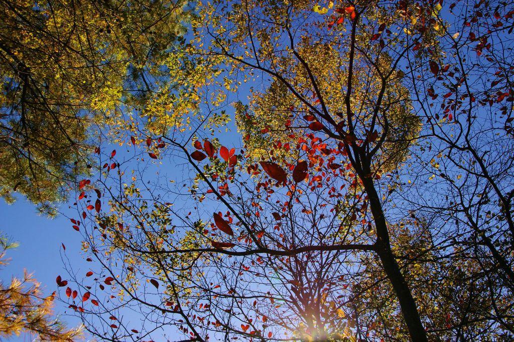 青空に浮かぶ紅葉2