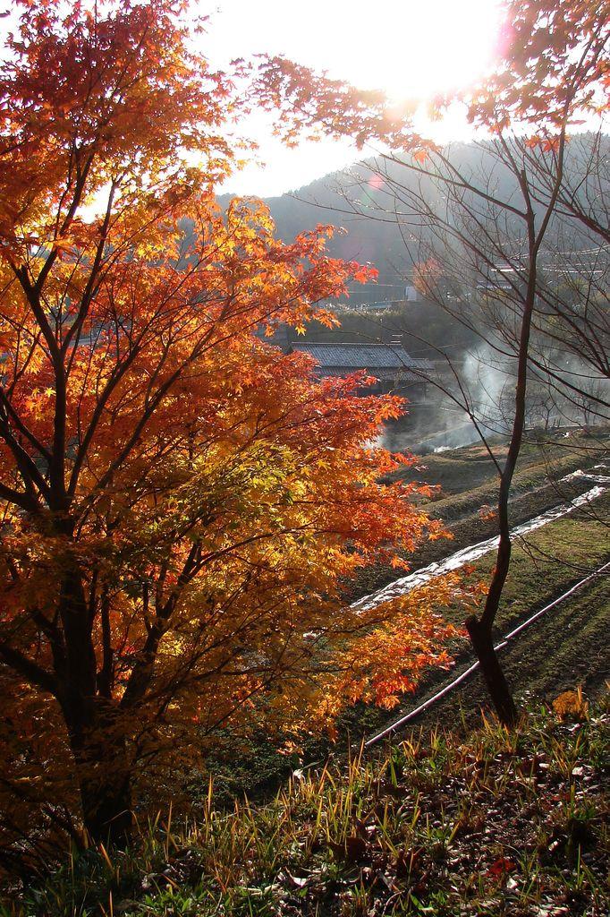 野焼と紅葉