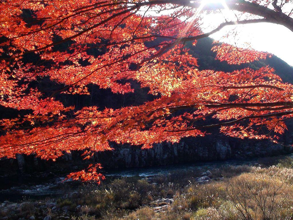 恵那峡の秋1