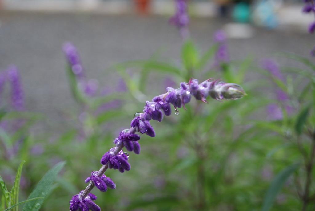 雨も滴る良いお花