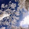冬の自然の造形美