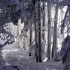 不思議の森の・・・