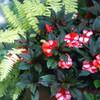 夏の英国庭園13