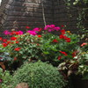 夏の英国庭園02