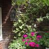 夏の英国庭園01