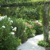 夏の英国庭園09