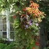 夏の英国庭園03