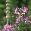 夏の英国庭園05