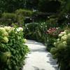 夏の英国庭園11