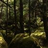 白駒池散策09