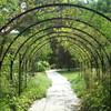 夏の英国庭園14