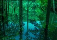 迷いの森の水鏡