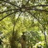 夏の英国庭園15