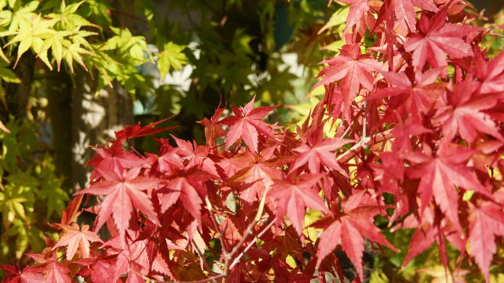 善光寺 城山公園の紅葉