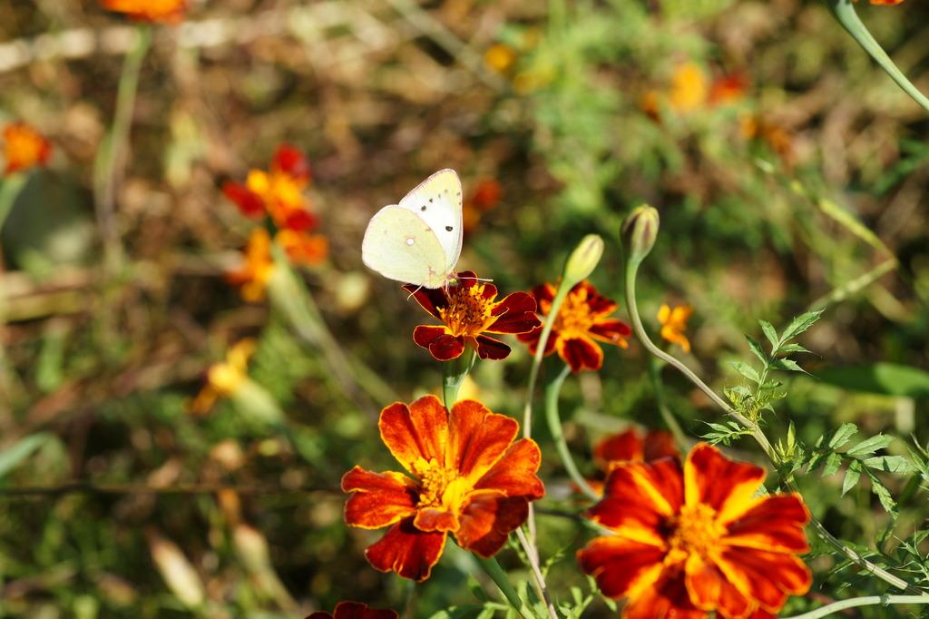 戸隠高原 羽根の淵がピンクの蝶