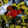 戸隠高原 紅葉のステンドグラス