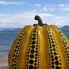 直島 きいろかぼちゃ