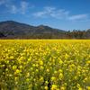 金色の野に降り立つ・・・
