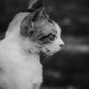 猫は哲学をする