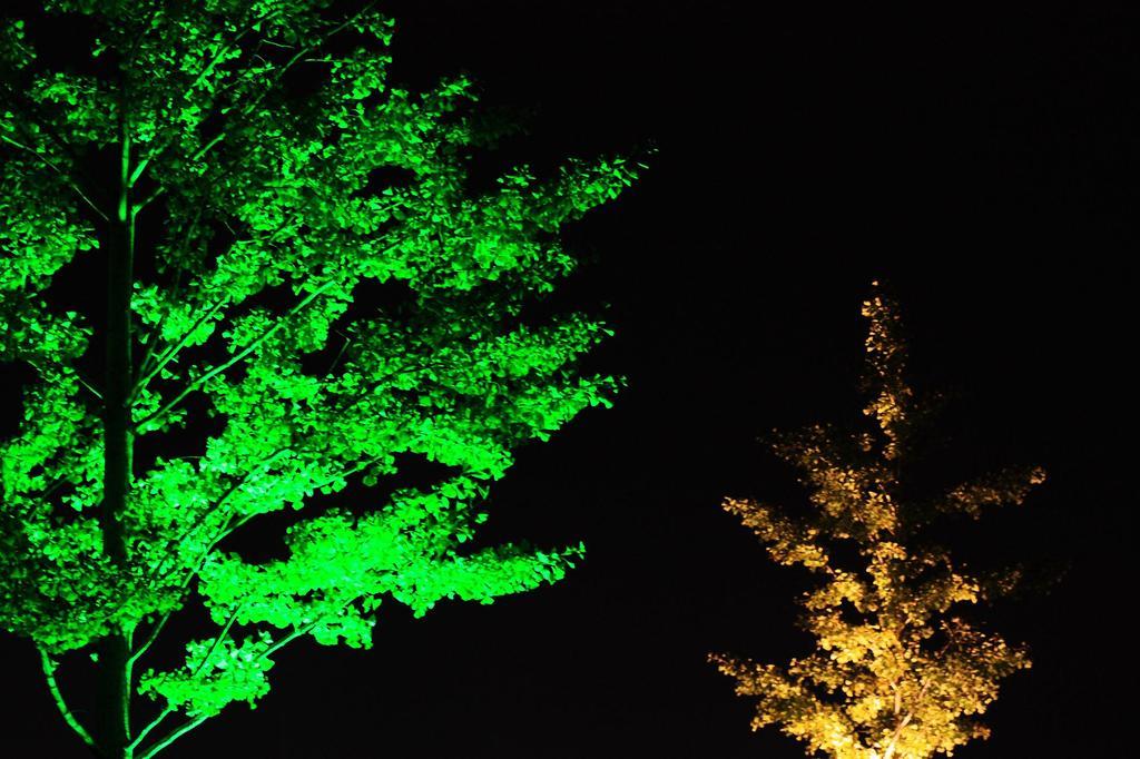 銀杏ライトアップ