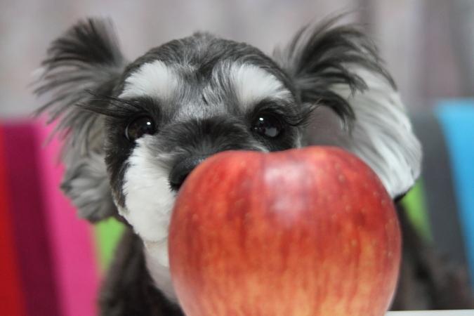りんご可愛や~