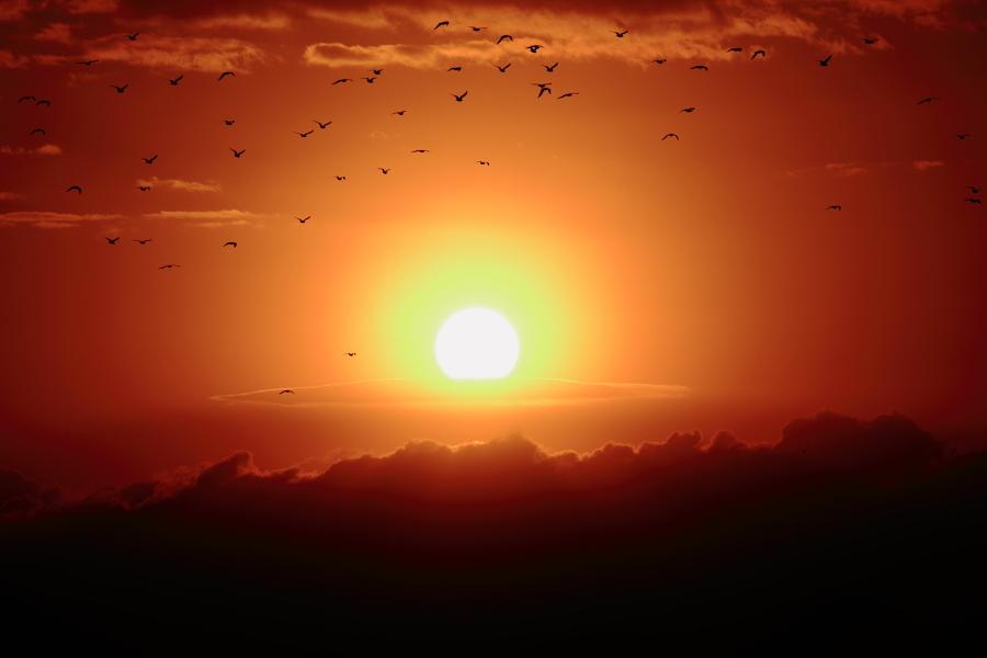 渡り鳥の夜明け