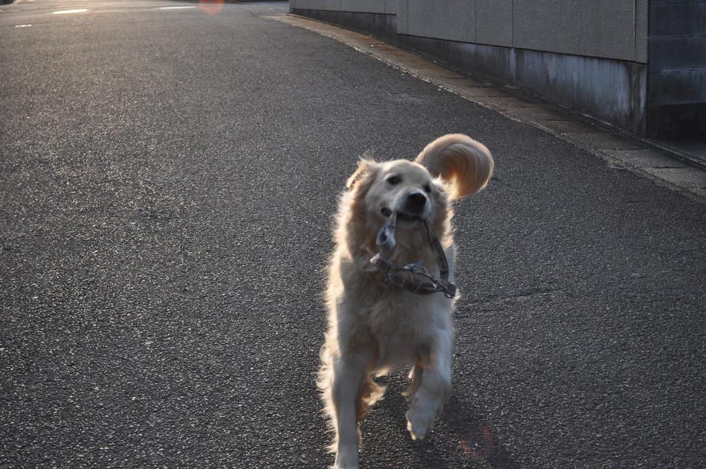 愛犬 シゲル