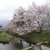 撮影途中に訪れた桜!奈良県宇陀市