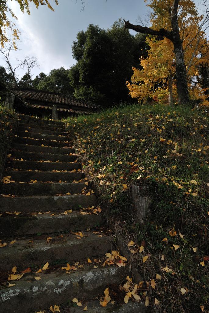廃寺を訪ねて(1)