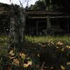 廃寺を訪ねて(2)