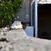 沖縄時間の猫