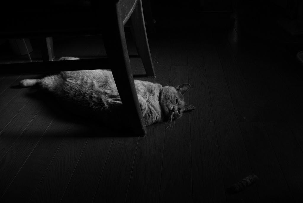 昼下がりの憂鬱