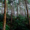神々の宿る森