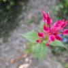 これなんて花だっけ その2