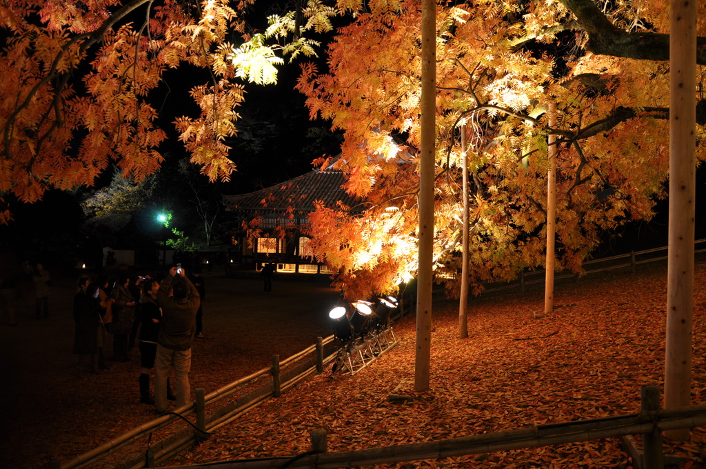 紅葉のライトアップ02