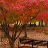 秋風ベンチ