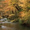 紅葉の奥入瀬渓流4