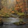 紅葉の奥入瀬渓流1