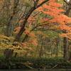 紅葉の奥入瀬渓流5