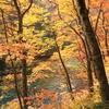 蔦温泉の紅葉7