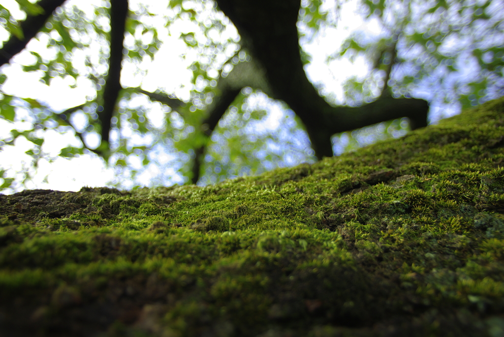 深緑の大地