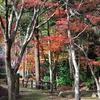 秋の終わり間近