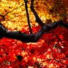 紅葉のステンドグラス